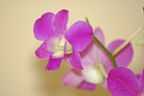 Orchid-Jan-Bloom-Day