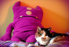 purple + orange + floofaliciousness = happy birthday, esther! (JKnig) Tags: orange cat bed feline purple uglydoll smilla floofy guestbed esther17 anyhoo not beepnbop floofalicious hopeyouhaveafabulousday poorthingneedsherbeautysleep hopefullysomedayitllbeusedbymseherself happybirthdaygirlie ihadaballshootingthisforyou evengotsmillatolookatthecamera vampthatsheis twosecondsafterisnappedthisshecurledbackintoherself andtookacelebratoryestherbirthdaynap