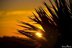 El abanico del sol / The sun's fan (madriguera) Tags: madrid sunset españa sun plant planta sol silhouette atardecer fan spain silueta madriguera templodedebod themoulinrouge magicdonkey abigfave artlibre goldenphotographer photofaceoffwinner
