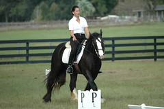 Lynn Palm Clinic (The Pelton Vanners Gypsy Vanner Horses) Tags: gypsy vanner