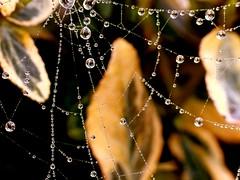 Spider Web [1100764] (acmelucky777 (so busy right now...)) Tags: sculpture macro art ice water closeup germany deutschland droplets drops waterdrop aqua wasser foto spiderweb drop panasonic droplet nrw splash waterdrops makro 2008 mode eis liquid auf 2009 dmc nahaufnahme wassertropfen tropfen spinnennetz westfalen fz50 nordrhein spritzer trpfchen raynox spritzen dropart makroaufnahmen alsdorf flssig spinnengewebe  gotasdrops wassertrpfchen  tropfenauftropfen