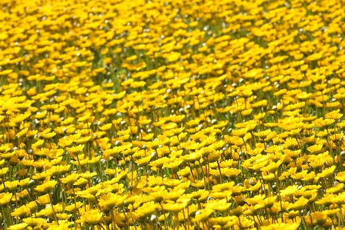 Yellow sea!