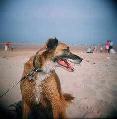 hot dog (ashy_sheela) Tags: dog beach sunshine holga seatonsluice