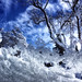 Snowed Under  )