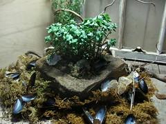 Sandstone Pot (boisebluebird) Tags: flowers plants plant art spring sandstone boise mussels sedum boisemovieman michaeltoolson boisebluebird boisebluebirdcom httpwwwboisebluebirdcom boiselandscaping boisegardener