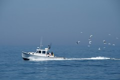 Wait! Wait! Come back! (garrettc) Tags: ocean blue sea seagulls water work boat fishing wdc chase easterly