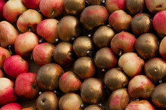The golden apples of Hesperids (paralecitam) Tags: autumn sea fall apple forest skne sweden shore leafs maciej maciek pple linne stenshuvud kivik paralecitam maciekburgielski maciejburgielski burgielski