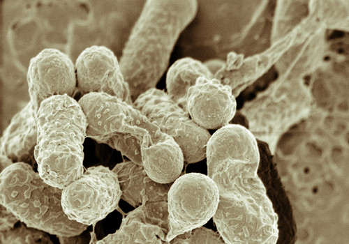 Can Bacteria learn?