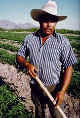 Farmworker in field with hoe