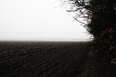 (L I N E) Tags: tree nature field fog contrast bush earth horizon soil hedge