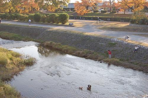 Rivière aux canards, depuis Kitaoji
