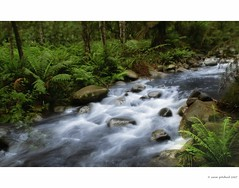 2 days of rain - Badgers Creek (Flamejob1) Tags: creek australia healesville victoria badgers yarraranges bestofaustralia