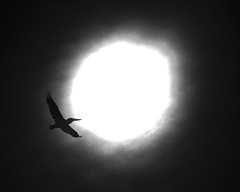 Touching the Void (Jacob K. Cunningham) Tags: ocean sanfrancisco ca sky bw usa sun bird beach contrast smrgsbord jacobkcunningham