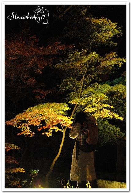 20071121京都永觀堂夜楓(18)