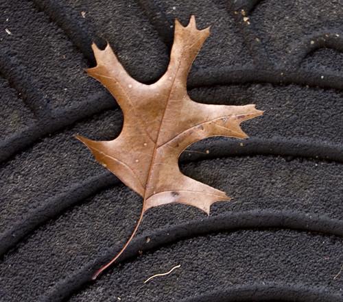 Leaf on my porch