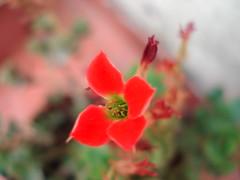 Piccola fiore                         Explore!! (***Carmem***) Tags: explorewinnersoftheworld