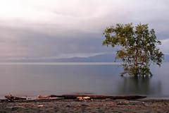 Puerto Jimenez (Toh Gouttenoire) Tags: costa nature costarica rica toh centroamerica gouttenoire gardela virela10 tohgouttenoire bidropcom