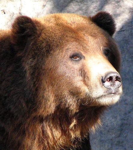 Brother bear 2216906489_1ae606d1ae