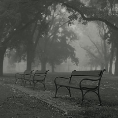 Benches (Vincnt) Tags: autumn mist tree fall 6x6 fog zeiss bench mood prague praha jr hasselblad squareformat czechrepublic ambience calmness vk 503cw ilfordid11 fujineopanacros100 ilfordrapidfixer goingwiththeflow platinumphoto anawesomeshot topofthefog nikonsupercoolscan9000ed planarcf8028t pavelhork platinumsuperstar wwwpavelhorakcom