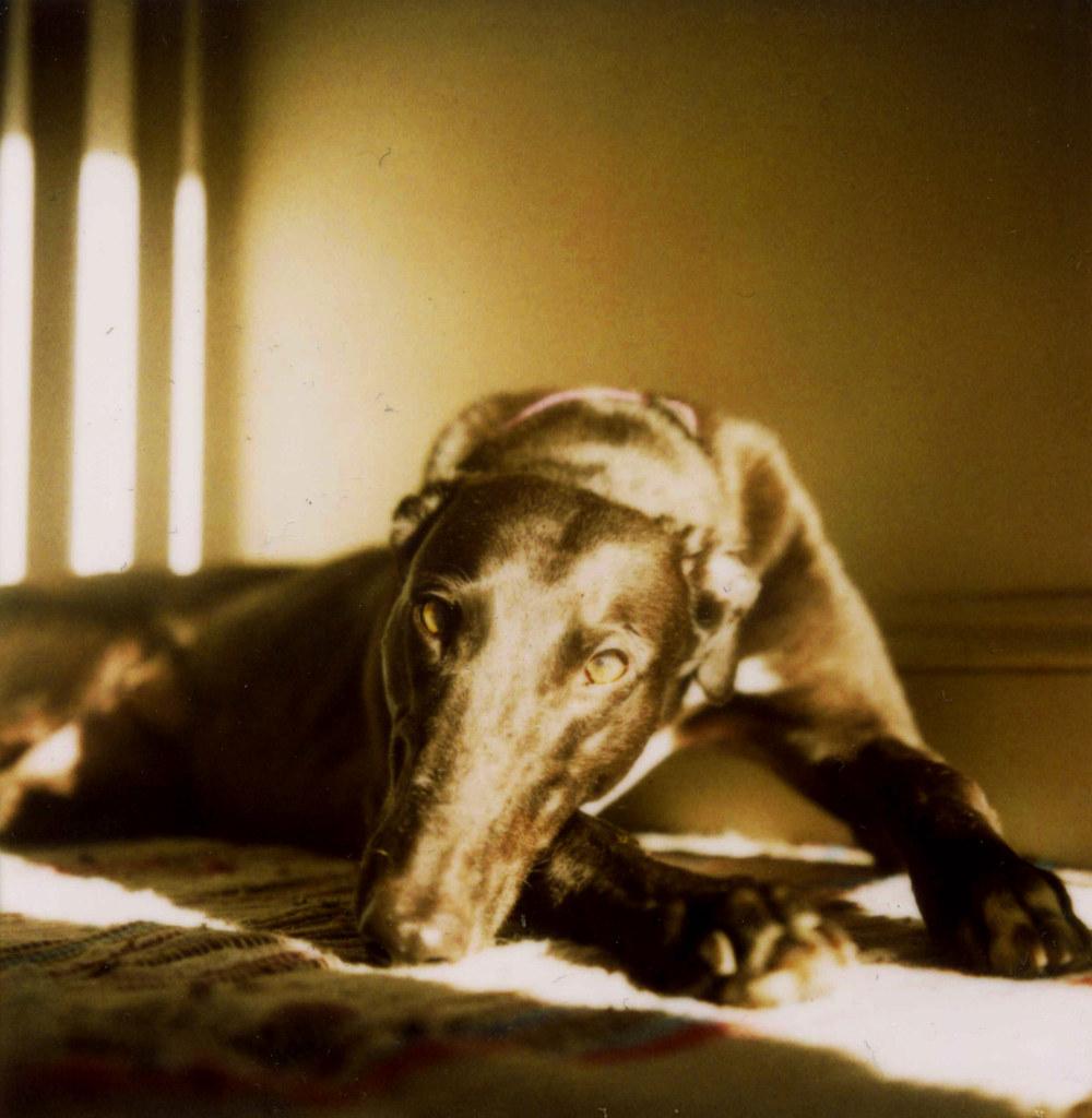 Wetting The Bed Greyhound Gap