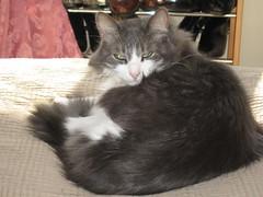 Crackhead, Looking Saucy (trhmp2000) Tags: cats kitties crackhead