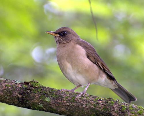 Aves de Córdoba