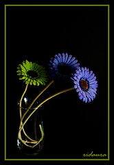 Vida Artificial ( Ridaura ) Tags: flores cabra jarron jarrn forero ridaura egabrense