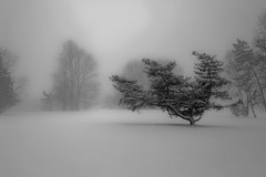 The Silent (romverj) Tags: snowflake christmas xmas winter blackandwhite bw white mist holiday snow storm black tree water fog forest canon golf lens landscape rebel one frozen back holidays silent pennsylvania snowy background snowstorm january course whitebackground single golfcourse vista canonrebel snowing xs bandw simple blizzard singletree wanderer visibility winterlandscape onetree treesinfog treeinfog canonrebelxs treesinmist simplecomposition treeinmist