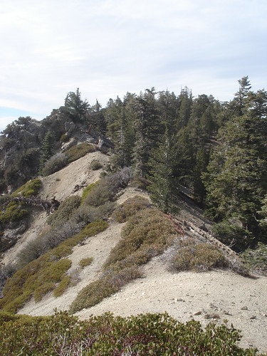 Ridge nearing Wilshire Peak
