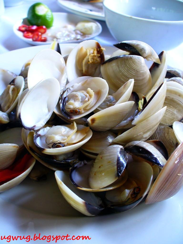 Lala (shellfish)