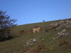 PB030106 (Quemando Chirucas) Tags: montecorona