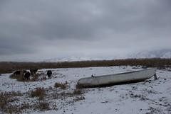 boat grazing (snow-owl) Tags: snow f14 greece borders photoclub florina prespes agiosachileios