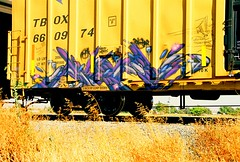 Timber MFK / Faves (All Seeing) Tags: art graffiti timber trains tags faves fs graffitiart freights mfk paintedtrains railart monikers paser freightgraffiti graffitidetail boxcarart faves1 hobotags detailstudy weedheads pasermfk timbermfk freightsquad favesfs faveswh