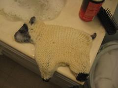 WIP: Sheepie, pre-felting