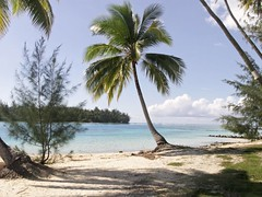 Cocotier à Moorea (kvf300) Tags: ocean blue sky mer beach pacific sable bleu tahiti plage frenchpolynesia pacifique polynesie