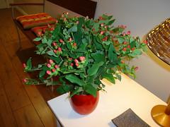 Arranjo da semana 17/fev (miluzeira) Tags: flowers plants house flores art wall design plantas interior decoration lugares rosas orquideas vases girassois arranjos ipericos