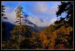 Great Smoky Mountains - Explore #387 (Jerry Jaynes) Tags: tn pigeonforge greatsmokymountains greatsmokymountainsnationalpark goldstaraward life~asiseeit explorefeb242008 photocontesttnc09