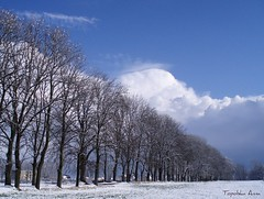 Narnia :) (anka.anka28) Tags: blue winter sky white snow tree nature poland polska puck naturesfinest pomorze abigfave ysplix platinumheartaward betterthangood