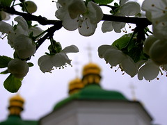 Domes of the Church of the Saviour at Berestove / Kiev (Subtle Shade) Tags: flower church kiev xxxxxx blueribbonwinner kievpechersklavra isawyoufirst goodnightmyfriend