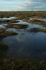 Skies in the bog (Murel Merivee) Tags: sunset evening spring bog wetland mire nigula