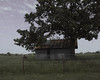 Shack (Cali2Okie (April)) Tags: roof tree oklahoma fence tin wire rusty rusted shack ok tinroofrusted cali2okie