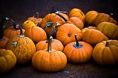 October at the Birmingham Botanical Gardens (Southernpixel - Alby Headrick) Tags: life autumn usa fun photography al birmingham october pumpkins alabama birminghambotanicalgardens allhallowseve favphotographer albyheadrick