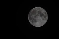 February Moon (Christopher Wallace) Tags: fullmoon moon astrophotography february snowmoon nikon 70300mm sky night celestial heavens nightsky winter diana luna digital wintermoon blacksburg southwestvirginia va trappersmoon buddingmoon bonymoon littlefaminemoon moonoftheraccoon moonwhentreespop moonofice stormmoon