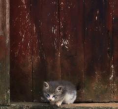 Baby cat (Sappho et amicae) Tags: babycat sapphoetamicae fauna