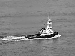 Ross Sea (bradmo) Tags: blackandwhite newyork harbor olympus tugboat hudson om zuiko 135mm ep2 rosssea