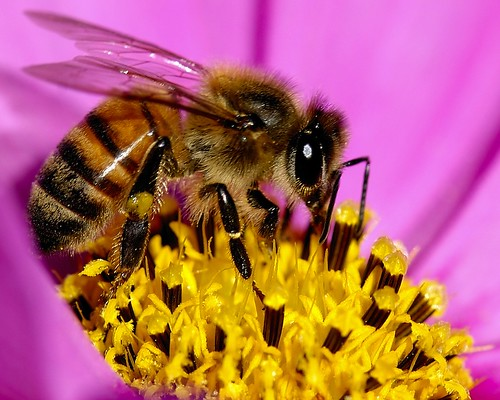 Bee Antena por Danny Perez, em CC
