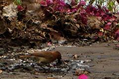 "Joo ""no"" barro (silviopc) Tags: costa rio do bonito velha casio estrada jardim miranda silvio exilim mato sul grosso pereira exz850"
