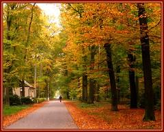 28okt07:  Gravenallee te Almelo........ (guus timpers) Tags: autumn herfst tol gracht beuken huize almelo slagboom tolhuis gravenallee slotgracht beautifulcapture tolheffen beukenlaan impressedbeauty