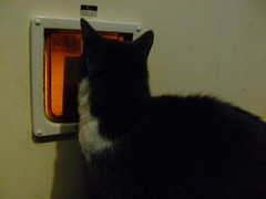 Dizzy wants in (byronv2) Tags: cats cat dizzy pussycat kittycat catflap
