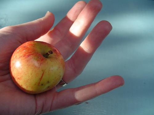 anne's apple